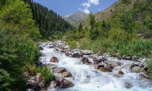 キルギスの花: アラアチャ国立公園