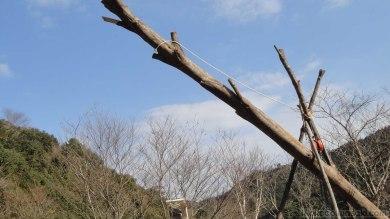 裏山の椎ノ木