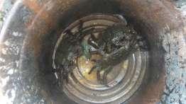 山太郎蟹の季節