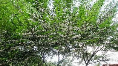 5月初旬の花