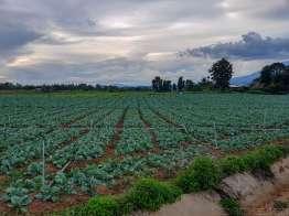 高原野菜地帯