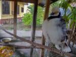 ムアンカム温泉リゾートの動物達