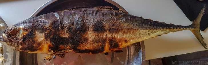 焼き魚大型