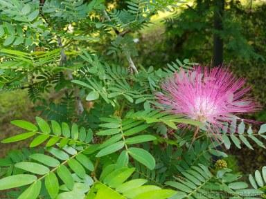 近くのダム湖畔に咲く花