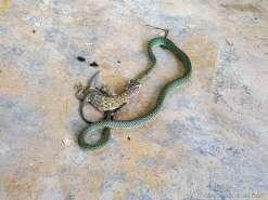 こちらを警戒して動き始めた蛇