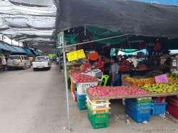 ポワイ市場、ドライブスルー青果市場