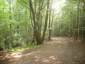 Die Fantasiereise entführt zu einem Waldspaziergang.