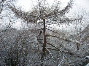 Eine Fantasiereise ind Reich des Winters.