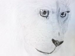tiere-zeichnung-mal-atelier-19