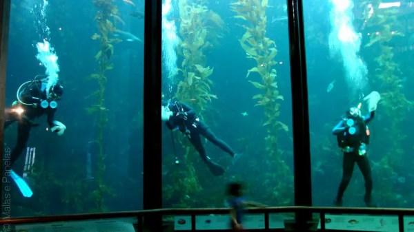 Kelp limpeza