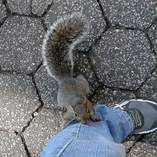 Imagem da Semana – Esquilo