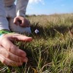 Imagem da semana – contato com a natureza