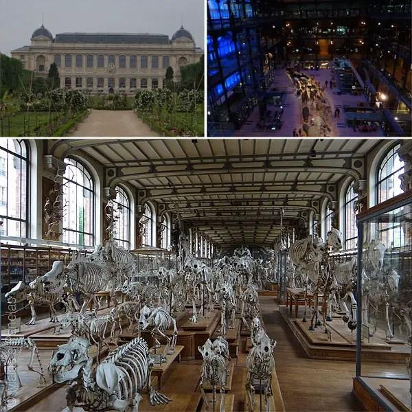 Jardin des Plantes, Museu Nacional de História Natural e Galeria de Palentologia e Anatomia Comparada