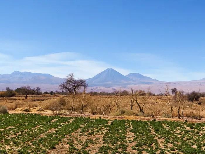 Tierra Atacama jardim
