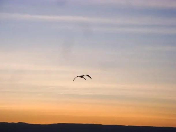Salar do Atacama - Não é sempre que se vê flamingos livres