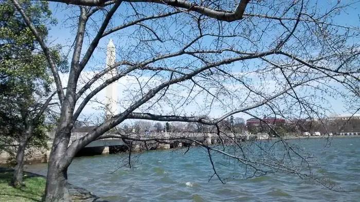 Arlington River 2 (1)