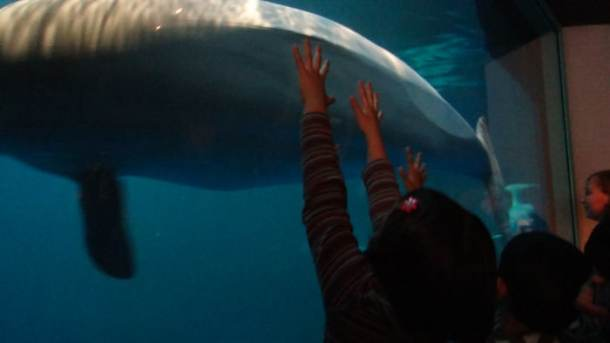 Chicago - Shedd Aquarium