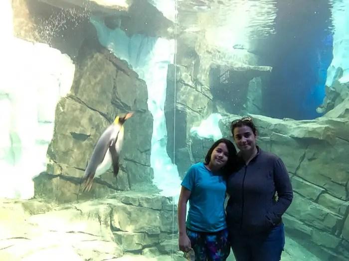 Vendo pinguins nadarem