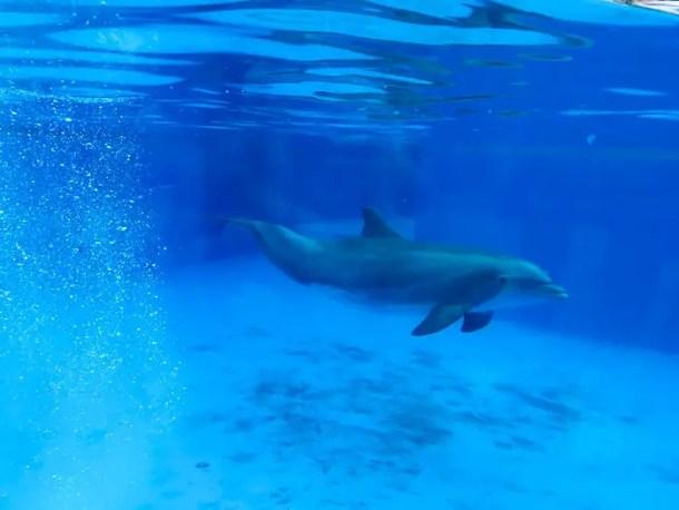 Dolphin Nursery - o berçário dos golfinhos