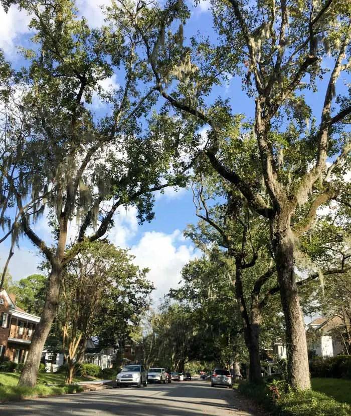 Passeando em Savannah