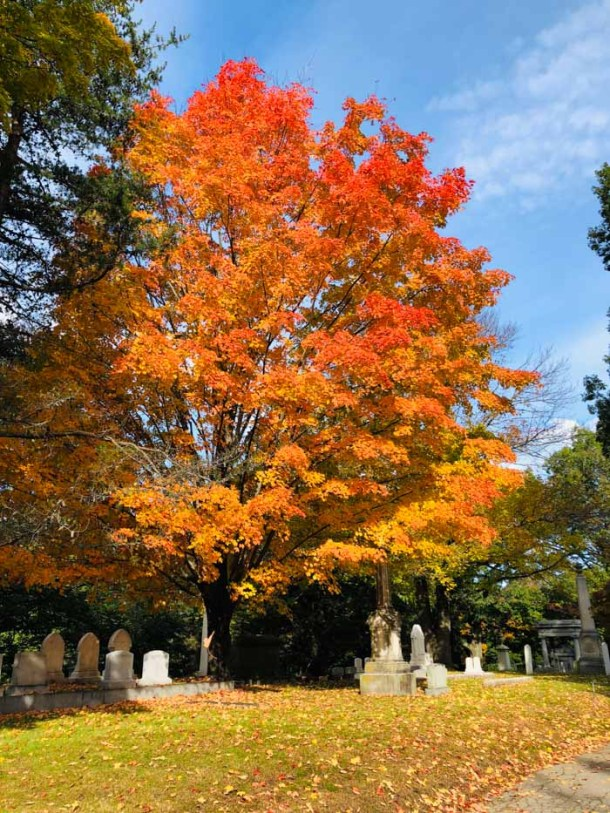 20 Great Places to Take Pictures in New England - Mount Auburn Cemetery, Boston, Massachussets | Travel Cook Tell