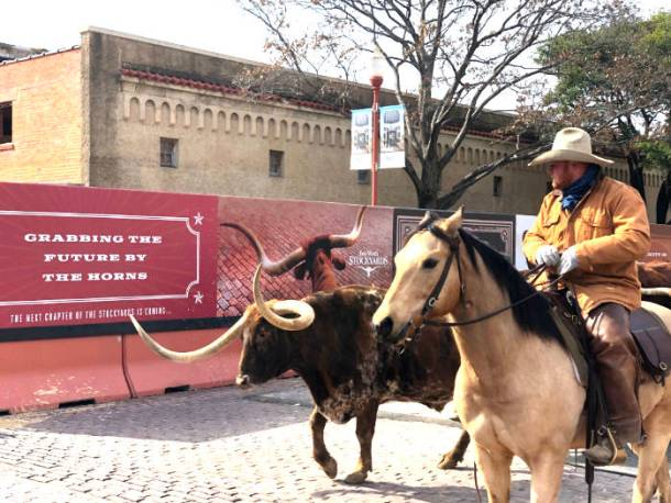 Cattle drive fort worth