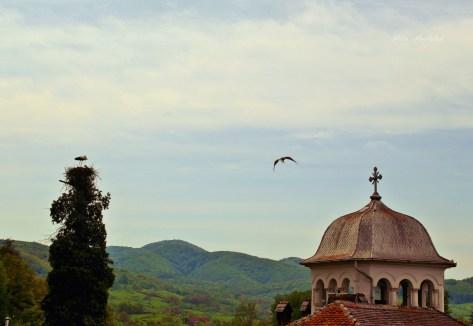 stork1