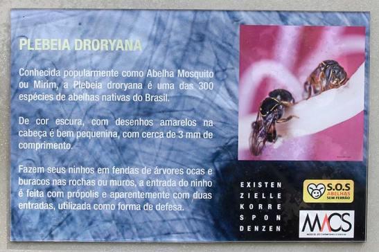 colméias, info-plate