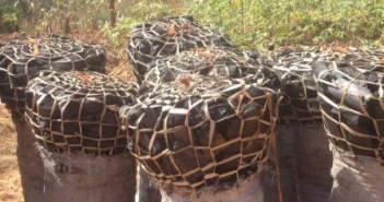 Charcoal- Malawi