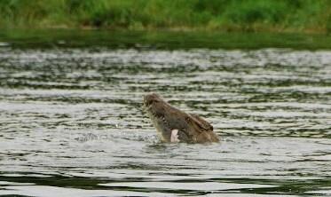 Lake Malombe