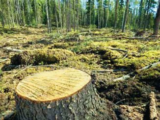 Chikangawa forest