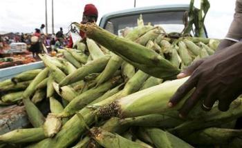 Green Maize Malawi
