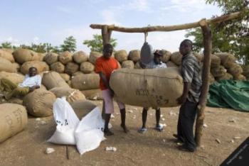 Malawi Cotton