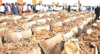 Malawi Tobacco
