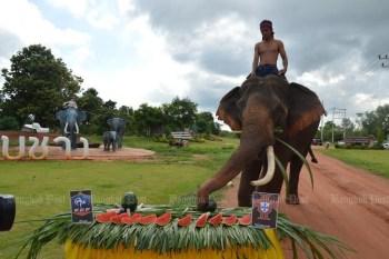 Star elephant Phlai Khwan Surin