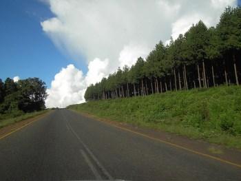 chikangawa-forest