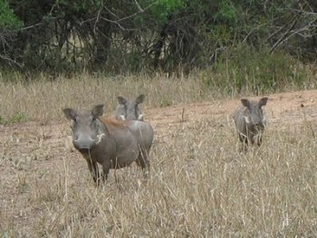 Chikwawa Lengwe National Park