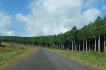 Vipya plantaions