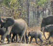 Liwonde national park