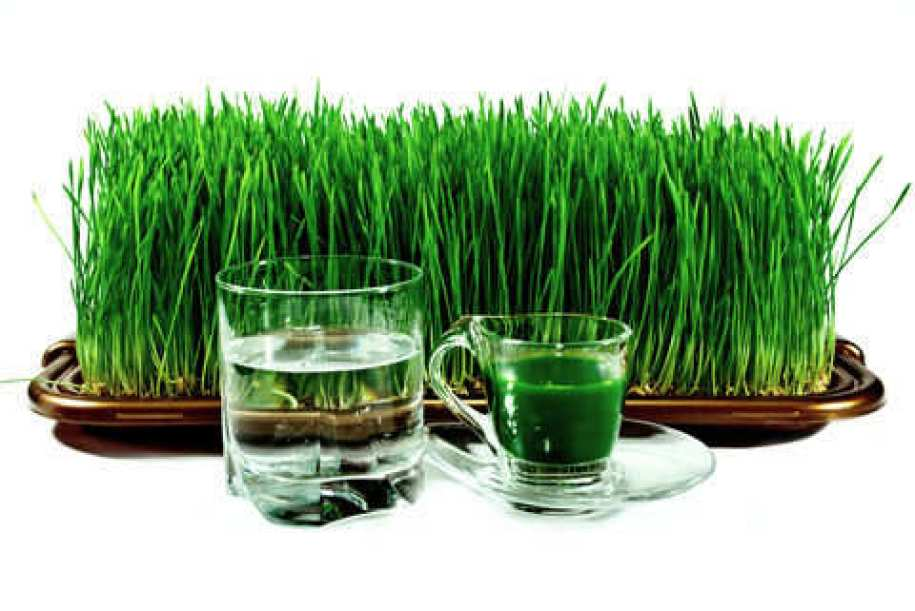 wheatgrass-benefits