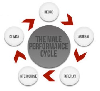 The Male Performance cycle