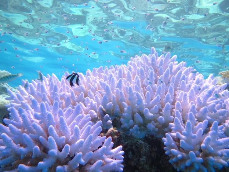 guest house in escursione al coral garden