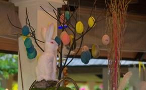 bunny (5 of 6)