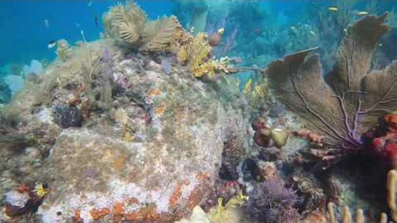 Banana Reef Maldives Snorkeling
