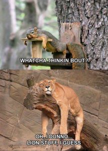 lion thoughts