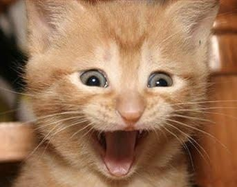 I was as excited as this Cat