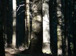 Bosc de Varicauva