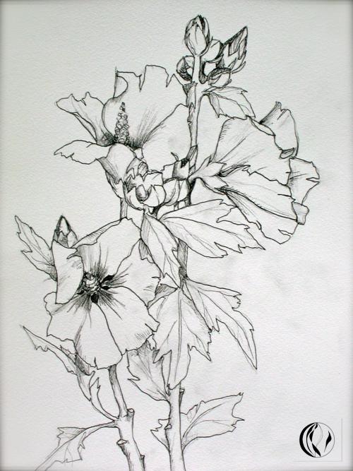 Blumen malen  Zeichnungen  Malen am Meer