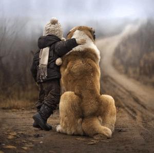 Cachorro e o Menino