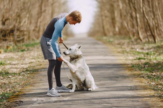 praticar exercício com cachorro
